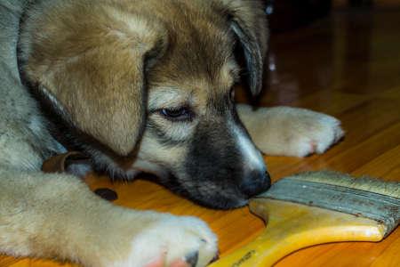 puppy and brush