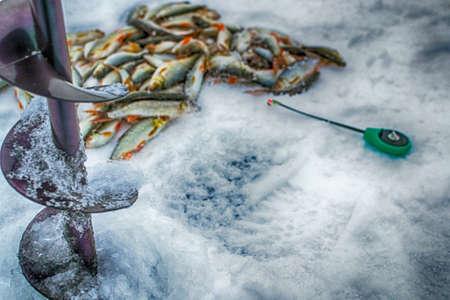 fresh raw fish fishing nature lake winter fishing