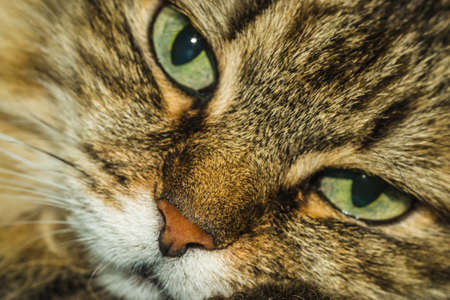 a cat thinks about life eyes are full of hesitation