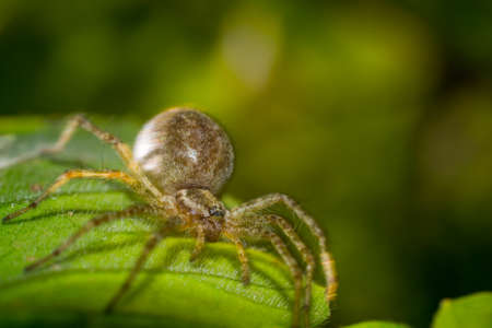 spider on leaf macro photo wildlife looks you in the eye Stock Photo