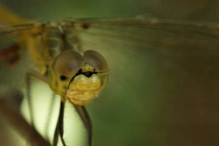 dragonfly close-up macro photo of the retina of the eye looks