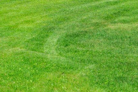 texture of green grass lawn summer green grass