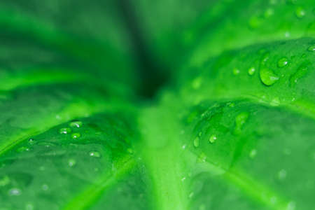 natural geometry abstraction green leaf after rain nature Stock Photo