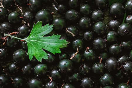 black currant berries the texture is vegetarianism a healthy diet Reklamní fotografie