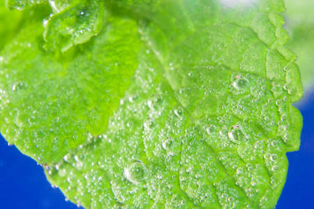 mint leaf close-up in water Imagens