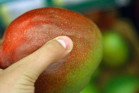 ripe mango fruit in hand Фото со стока