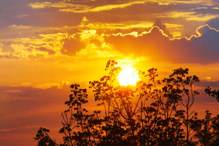 the setting sun and the sky on the background of trees. the sunset is a natural phenomenon of a bright red sun