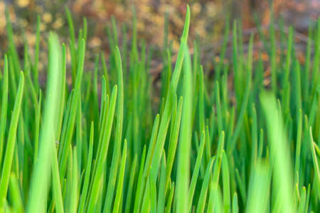 green bow background texture farming agriculture agriculture kitchen garden Фото со стока