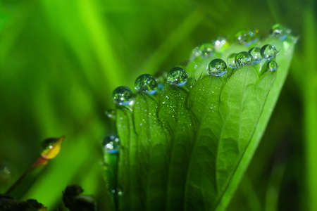 a drop of morning dew on the leaf of the strawberry closeup. abstraction on the background of the natural beauty of nature closeup wildlife