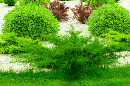 the element of garden decor colorful small trees gardening