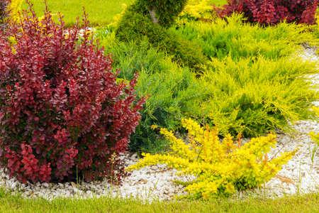 l'élément de la décoration de jardin de petits arbres colorés jardinage