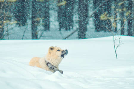 puppy winter in the forest snow weather snowfall first snow Standard-Bild - 127132229