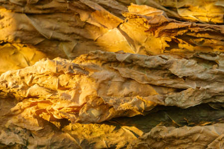 dry tobacco leaf close-up macro