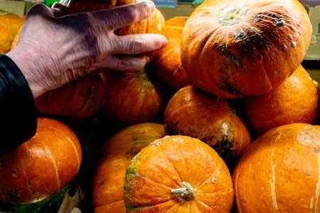 pumpkins closeup background sale texture buying pumpkins for Halloween