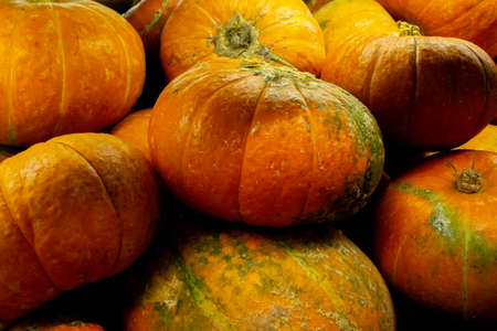 pumpkin closeup background selling in the store