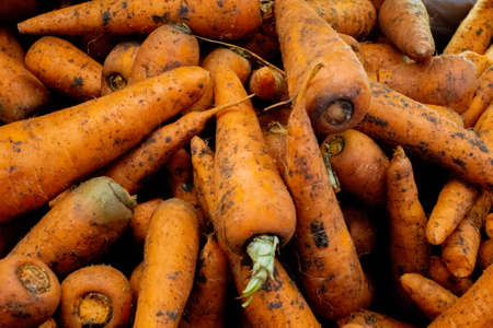 fresh carrot closeup background texture