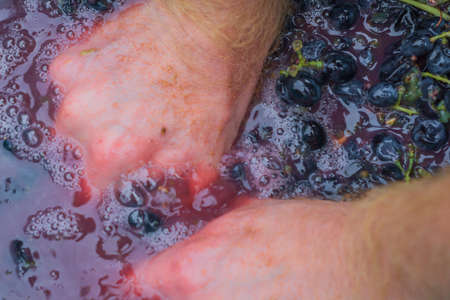 making wine from grapes crush grapes
