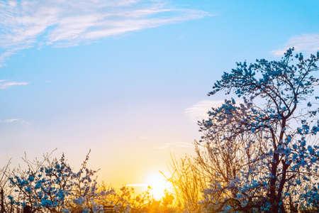 sunset in a blooming garden Banco de Imagens