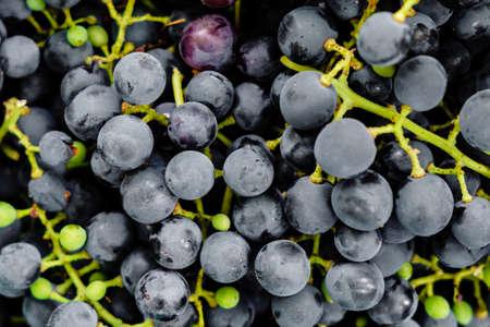 ripe black grape background texture Banco de Imagens