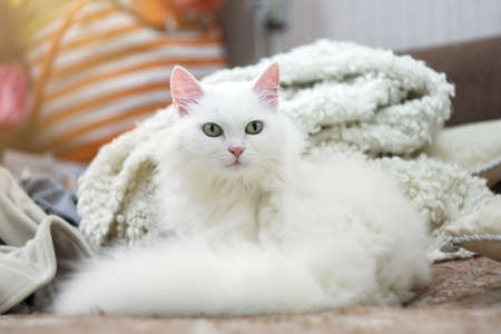 white cat sitting on a brown couch and looking at the camera