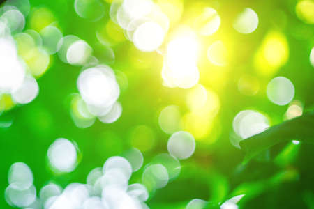abstract blur green color for background, blurry and blurry effect spring concept for design