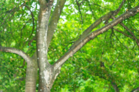 rain on a blurred natural background, defocus, selective focus, nature, long exposure, bluer, rain in the forest, bokeh