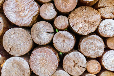 Pile wood. Deforestation theme. Wood industry. Chopped wood Woodpile scene 免版税图像