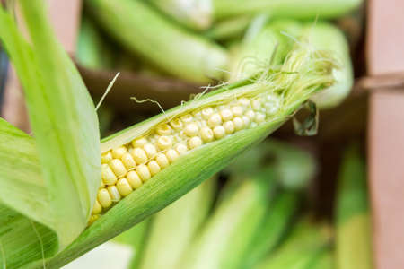 raw, sweet corn in a supermarket or grocery store close-up