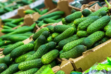 green cucumbers on the counter of the market, a hypermarket of vegetables. selective focus 免版税图像
