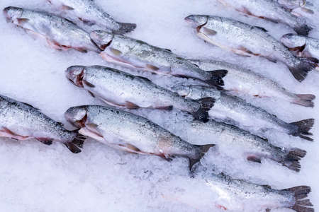 fresh gutted large red fish trout and salmon lies in pieces of ice on a counter sold in a store 免版税图像 - 151881996
