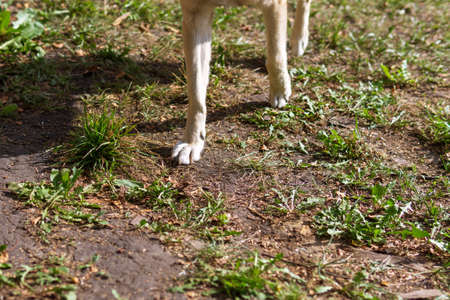 Fresh dog footprint ground with green grass. dog feet selective focus