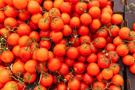 Delicious red tomatoes. It can be used as a background. selective focus