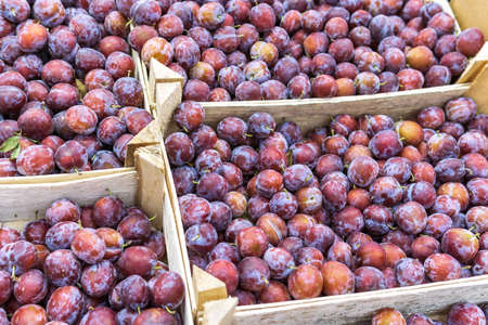 plums are sold at the farmers market. Fresh plums close-up. Selective and soft focus. Season of plums and other fruits. 写真素材