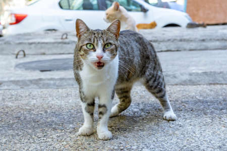 Portrait of a street cat, a cat looks into the camera, a cat's muzzle close-up. Imagens