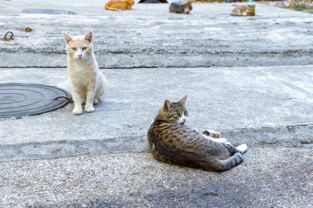 Homeless Cute Cats Homeless animals theme. selective focus