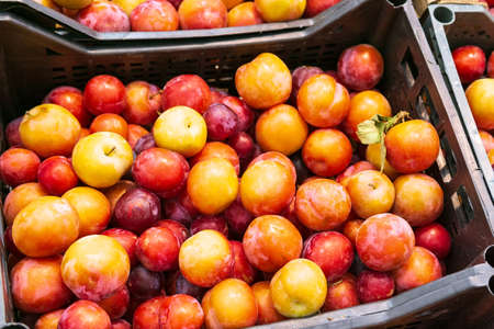 natural plums in box Pile of red cherry plums set. Shopping plum berry in self service store Imagens