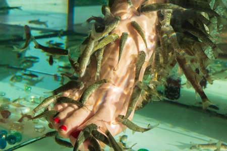 Fish pedicure by garra rufa fishes. female foot in the water where peeling with fish.