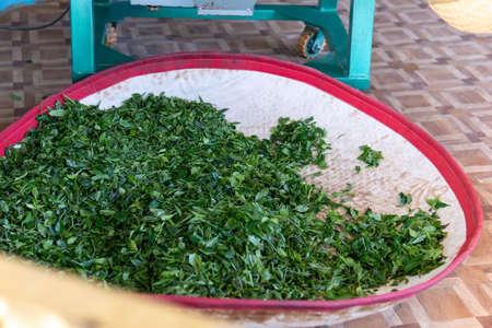 picking top green tea for making matcha green tea with tea plantation