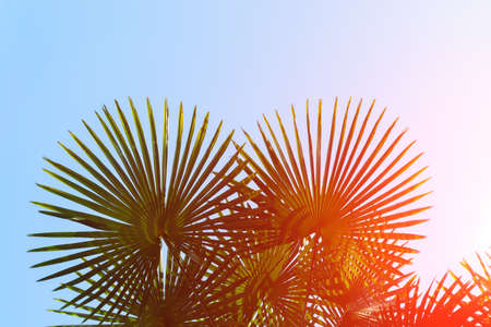 palm tree under summer sky. tropical background. Travel. Copy space