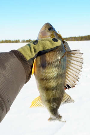 Active recreation in winter on river. Fishing for perch. ice fishing. vertical photo