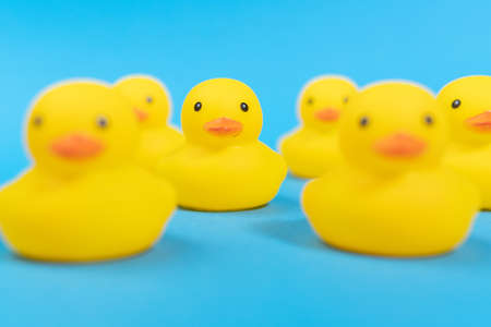 yellow rubber ducks on a blue background. Minimal design. selective focus