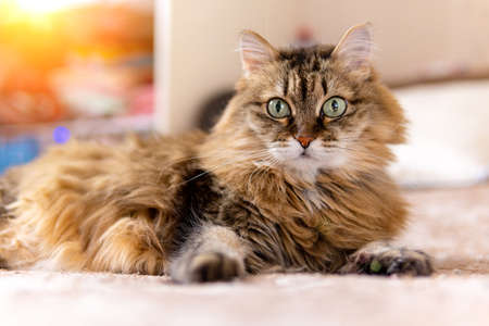 closeup shot of a brown cat with green eyes lying on a sofa