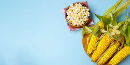 Corn on the cob, popcorn on a blue background. Topic - agro, corn cultivation, harvest. Copyspace