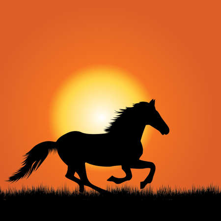 beast ranch: Horse galloping on the field against sunset
