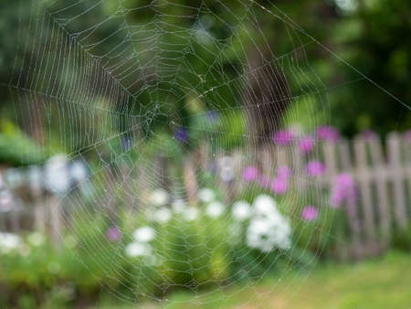 Beautiful spider web with water drops close-up. In the background a blurry summer landscape Banco de Imagens