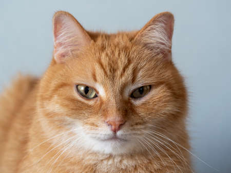 Close-up photo of a red cat with yellow eyes looking directly at the camera