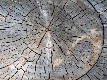 old day, log cabin, crack rings. beautiful wooden background