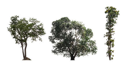 three tree dicut on white background save in jpg file Clipping paths.