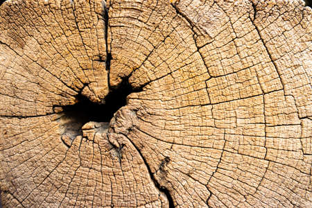 texture of old wood tree trunk background Imagens