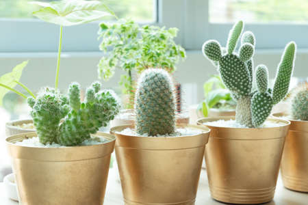 Various of cactus for decorated Imagens